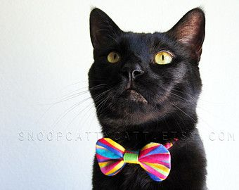 Cat Bow Tie  Rainbow Carnival