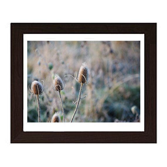 A personal favorite from my Etsy shop https://www.etsy.com/uk/listing/220895136/teasel-in-the-frost-photograph-wall-art