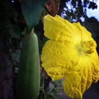 #flores #megusta #photo #venezuela #photography #like #photographer #foto #amarillo