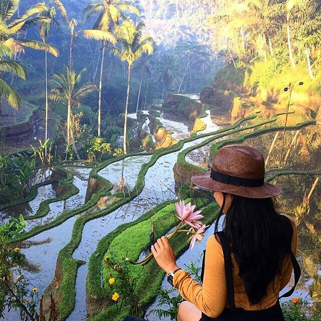 Morning view from Tegalalang Rice Field, Gianyar Bali. #islandlife #defineyourlifestyle