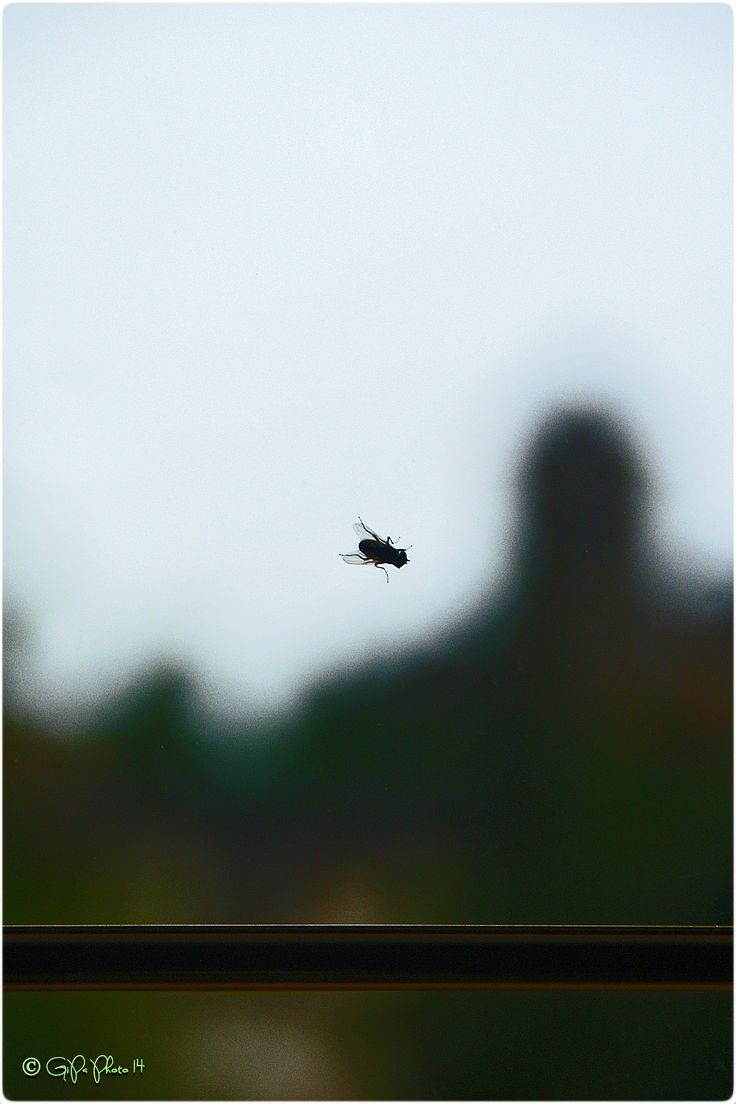 out of focus #1384
