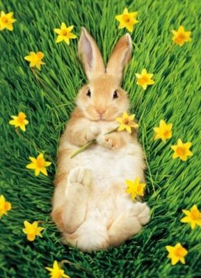 Spring and Easter / karen cox. Bunny resting in the field                                                                                                                                                      More