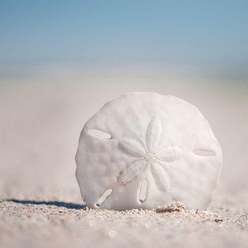 at the beachNew Smyrna Beach, Shells, Sanddollar, Coastal Style, At The Beach, Sand Dollars, Finding Neverland, Nature Beautiful, Sands Dollar