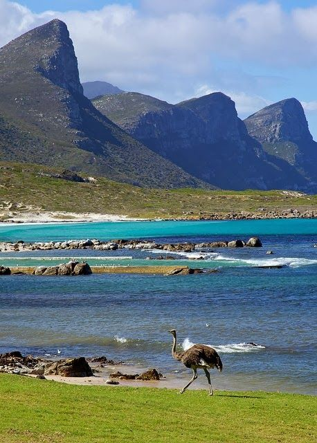 Cape Of Good Hope Nature Reserve South African Coast