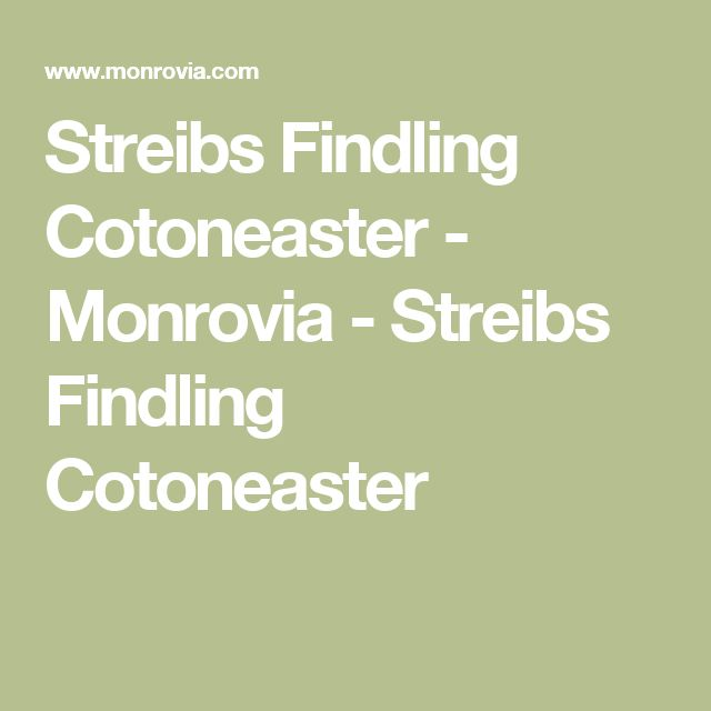 Trend Streibs Findling Cotoneaster Monrovia Streibs Findling Cotoneaster