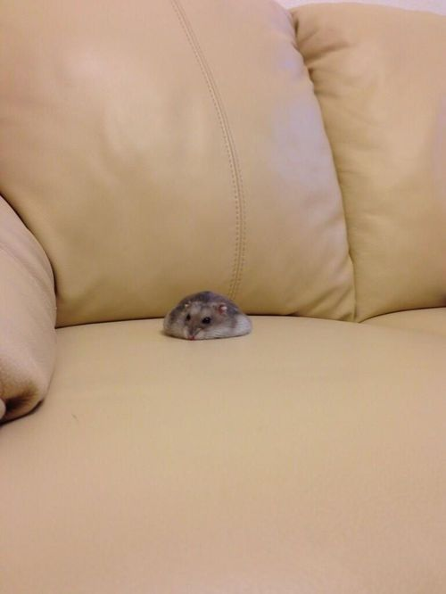 Someone spilled their hamster on the couch. Hahaha