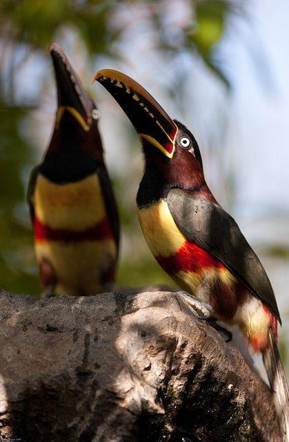 Toucan symmetry