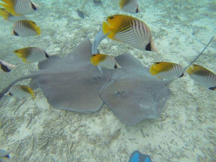 Dicas de viagem para Bora Bora, na Polinésia Francesa