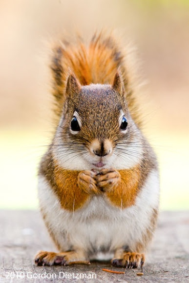 And these birds---Red Squirrel