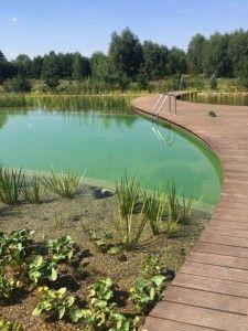 Staw kąpielowy z pomostem. #projektowanie ogrodów, #hurtownia kamienia, #projektowanie ogrodów Toruń, #projektowanie ogrodów Bydgoszcz, #ogrody Toruń, #ogrody Bydgoszcz, #staw, #staw w ogrodzie, #staw kąpielowy.
