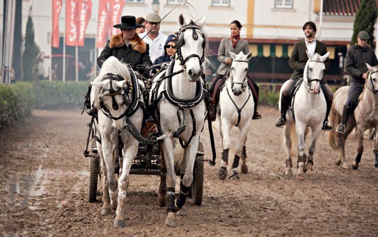 Golegã #Portugal Konie rasy lusitano