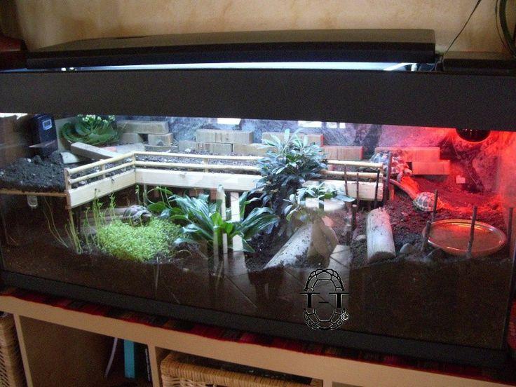 les 25 meilleures id es de la cat gorie terrarium tortue sur pinterest tortue russe enclos. Black Bedroom Furniture Sets. Home Design Ideas