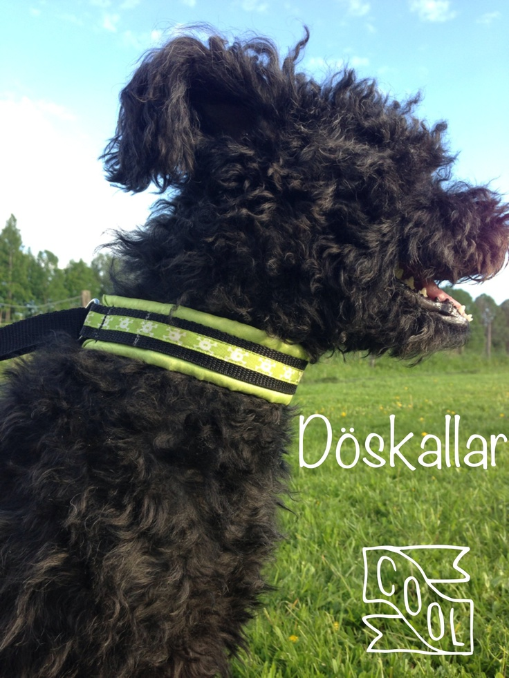 Mops vann ett presentkort på 50 kr hos en hundaffär när hon tävlade i Växjö som räckte precis till detta snygga halsband med små döskallar på. I blankt tyg som inte sliter på pälsen.