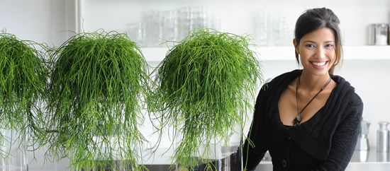 Rhipsalis, planta del mes de octubre,https://www.facebook.com/BolasDeMusgo
