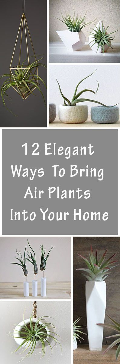 12 Elegant Ways To Bring Air Plants Into Your Home                                                                                                                                                                                 More