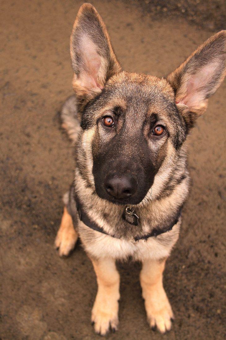 Naughty But Nice Dog Training