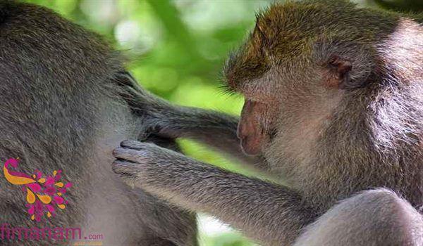تفسير القمل في الحلم للامام الصادق 1 Lice Infestation Koala Bear Head Itch