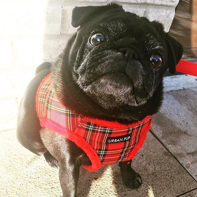Urban Pup Fleece Lined Red Tartan Step In Harness Jacket Available