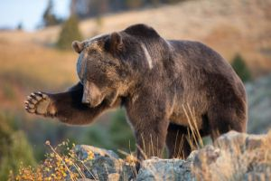 Dangerous Animals in the Rocky Mountains!