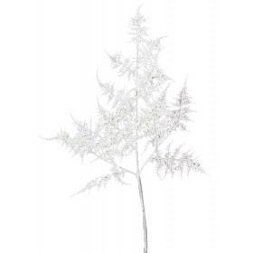 White Asparagus Fern