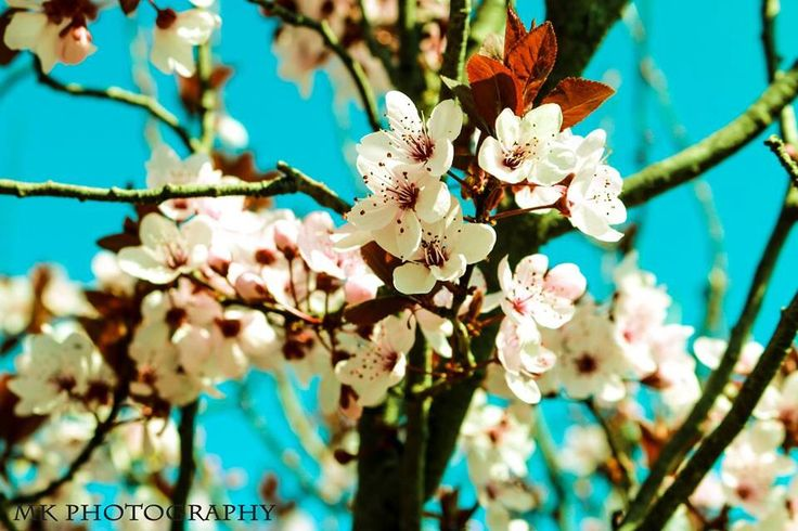 Amazing spring!  Photo by: MK Photography