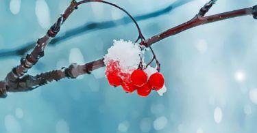 Plodiny, sezónní vzimním období, jsou plné chutí, barev a vitamínů. I když většinou nepocházejí znaší oblasti, jejich zdravotní přínosy jsou mnohdy silnější, než ovoce typické pro léto. Jako by se o nás matka příroda starala i vtyto mrazivé dny. Pojďme se tedy společně podívat na plodiny, které bychom neměli vzimě určitě opomenout. Grapefruity, pomeranče a …