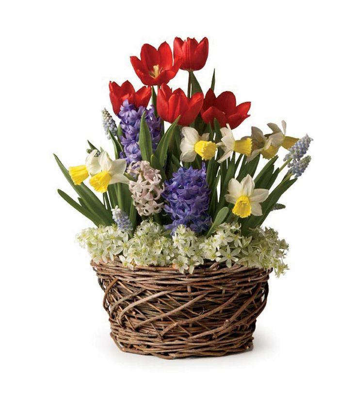 Assorted 19 Bulb Pre Planted Flower Bulb Gift Garden   Available Starting  November 2014