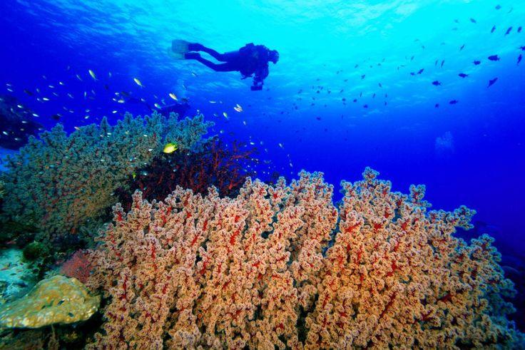 Hvis du dykker med Discovery Palawan i Filippinerne kommer du bl.a. til det smukke Tubbataha reef!