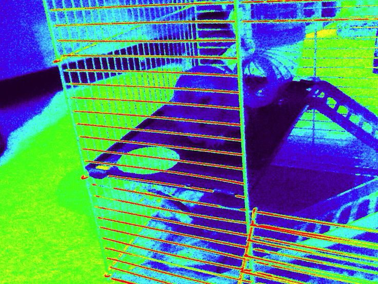 """""""Even though it's thermal imagery, we can still see you Hammy Hammelizabeth!!!"""""""