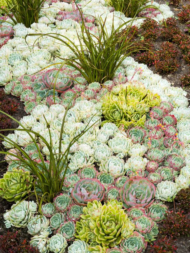 Idee winter tuin idees : succulent combo,different colors and textures make a wonderful pattern ...