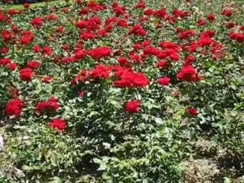 El parque de los rosas Málaga 2012 vídeo musical.