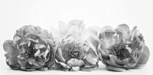 21 best Blumen schwarz/weiß images on Pinterest   Blumen, Schwarzer ...
