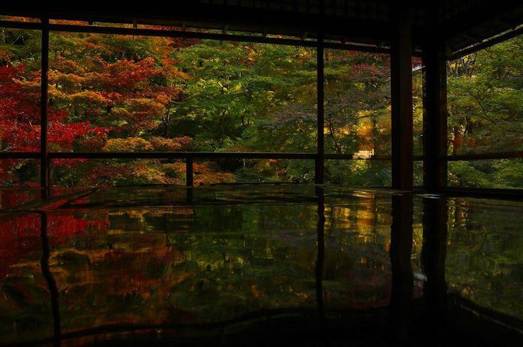 瑠璃光院 - 瑠璃の庭 2F 2016.11.12 #japan #kyoto #rurikouin #temple #autumnleaves #beautiful #日本 #京都 #瑠璃光院 #寺 #紅葉 #もみじ #秋 #美しい 先週の写真。紅葉はまだ早かったみたい…。またリベンジしたいなー(*_*)