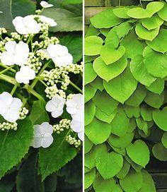 ehrfurchtiges typische herbstblumen und graser die den garten der kuhleren saison schmucken gallerie images und ccbeeca garden ideas