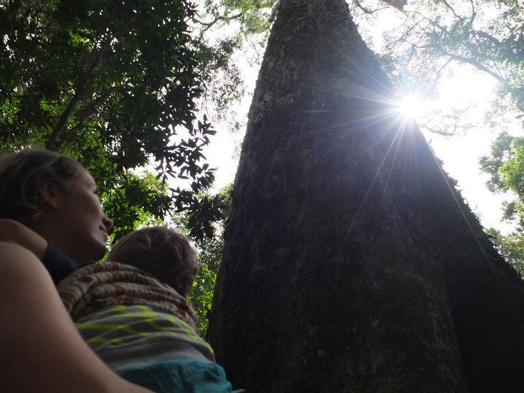 Tsitsikamma Big Tree Trail, South Africa   One Footprint On The World