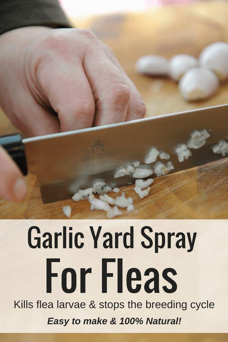 Homemade garlic yard spray for fleas flea spray for