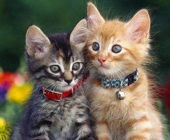 http://www.gatomiando.com.br/gato-miando/cat-gatos/nomes-engracados-de-gatos-gato-miando-86.jpg