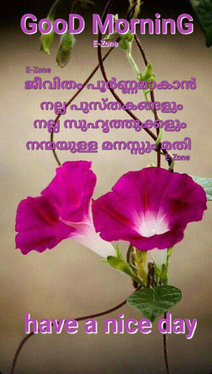 20 Morning Glory Grandpa Ott Ipomoea Easy Fast 15 Foot Vine Flower Seeds Ebay Flower Pots Flower Seeds Planting Flowers