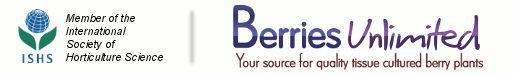 Berries - Blueberries - Blueberry Bushes - Berry Bushes for Sale - Blueberries, Blackberries, Raspberries, Strawberries, Honeyberries, Plants, Bushes, Berries