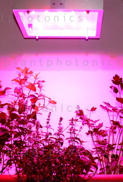 watt mini grow light best led grow lights
