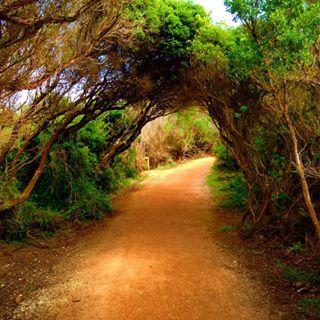#australia #greatoceanroad #splitpointlighthouse #visitaustralia #instanature #nature #trees #travelgram #passionpassport #photooftheday #passportready #picoftheday #mylife #mytravelgram #beautifuldestinations #australia #amazing_wa #aussiephotos #BBCTravel #wonderfuldestinations #TFLers #Tlpicks #MagicPict #NatGeoLandscape #Nikon_Photography_ #BestVacations #BeautifulPlanett #vscocam