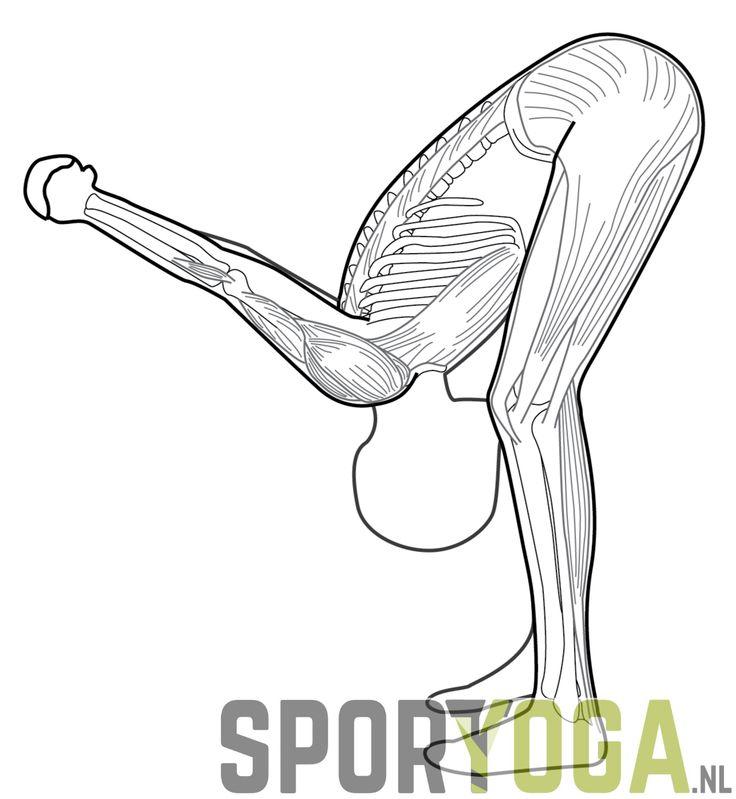 Back shoulder stretch anatomy yoga from sportyoga.nl