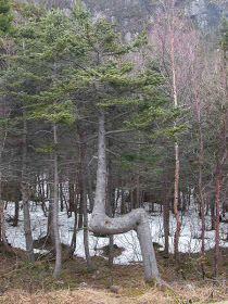 Los Árboles más extraños, curiosos y exóticos de nuestro Mundo (Fotos).     Recopilación de fotografías de los árboles más extraños,...