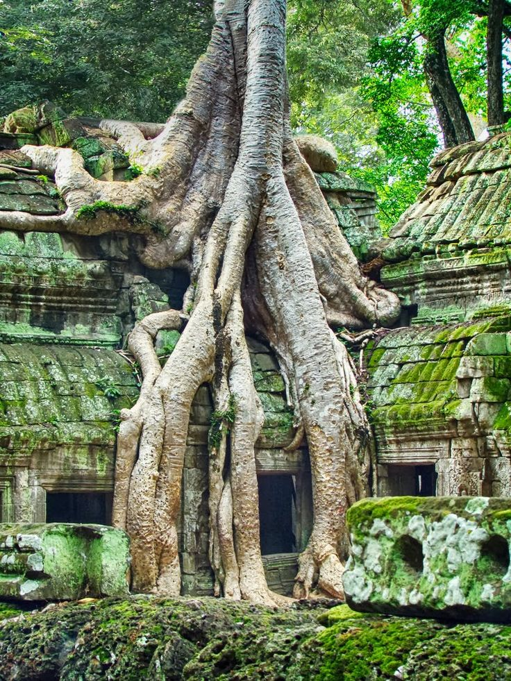 I would love to travel to Angkor Wat in Cambodia. …