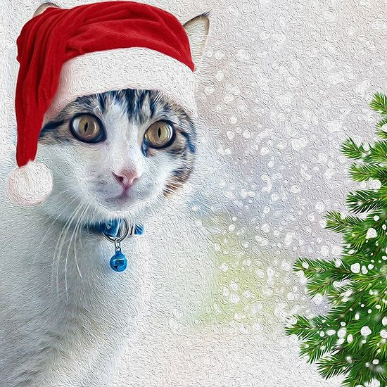 Whiskey The Christmas Cat