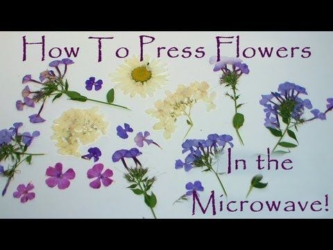 Hi Folks! Today I am going to show you how to press flowers in the microwave with nothing more than a piece of paper, paper towel and a ceramic tile. It is s...