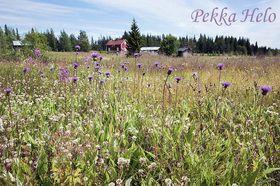 Kesäkuvat, Summer pictures - Kainuun Luontokuvat