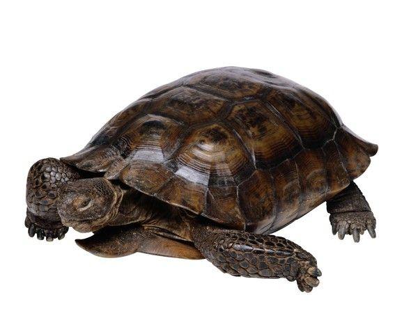 #cute #tortoise
