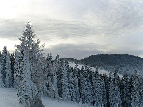 Wierchomla - zima 2007
