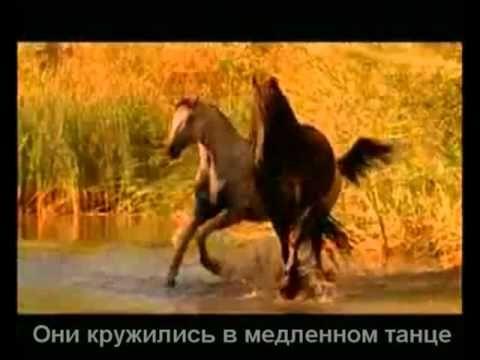 Красивая музыка о нежности и любви (Арабатский конь).mp4